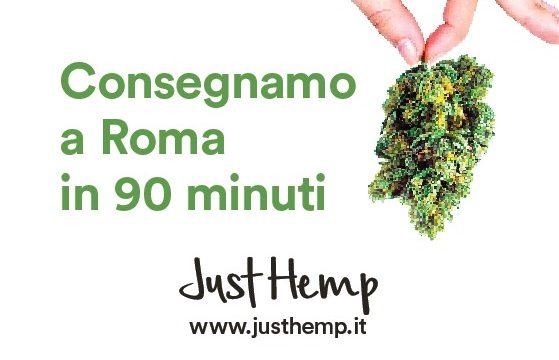 Delivery di erba legale entro 90 minuti a Roma!