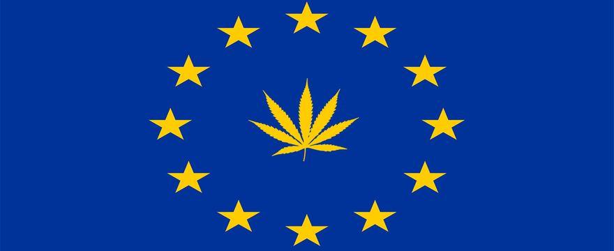 Cannabis light – Tutto quello che devi sapere